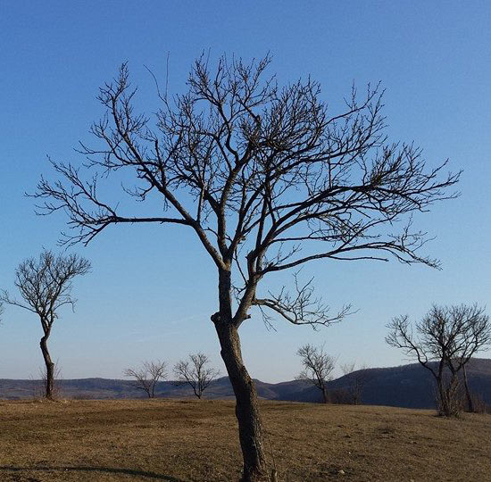 עצים ללא עלים